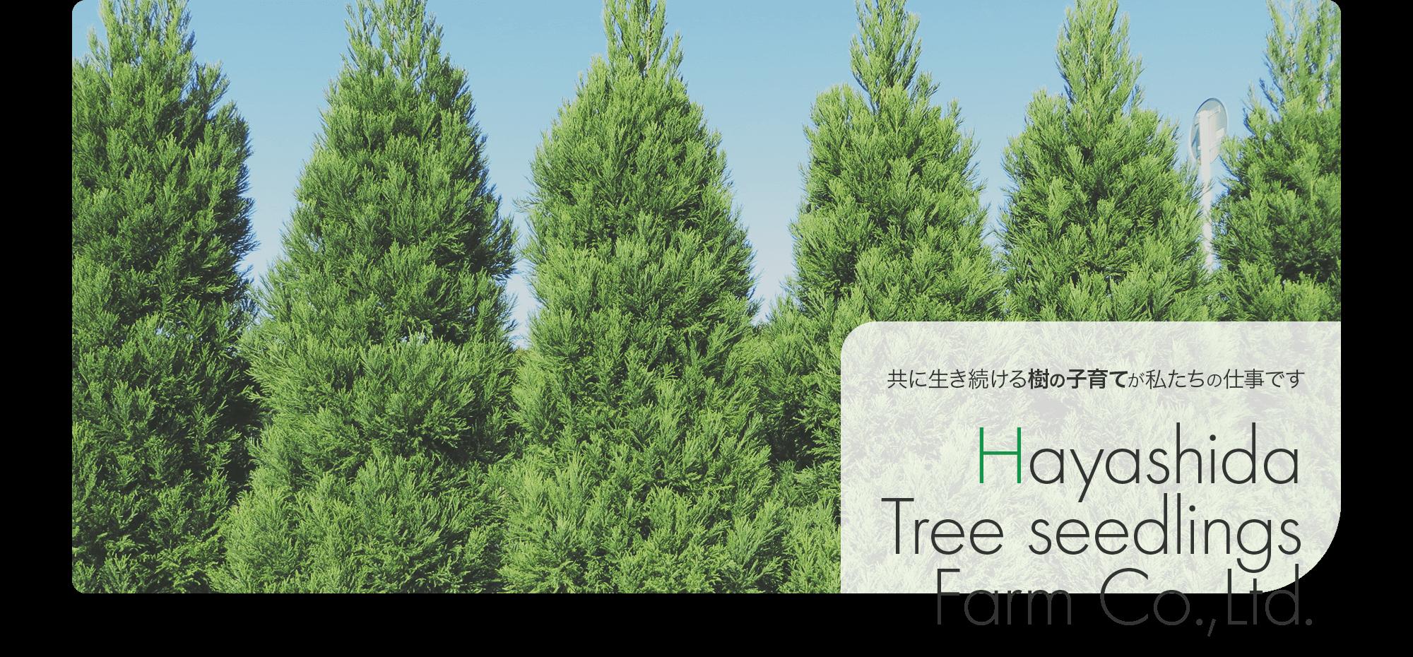 共に生き続ける樹の子育てが私たちの仕事です